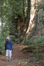 a child looking up at tall trees in a forest