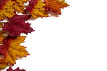 brown fall leaves border on white background