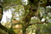 moss on a limb