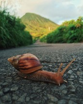 a snail on pavement