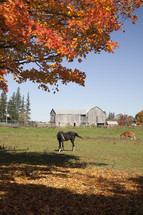 horses playing in fall leaves