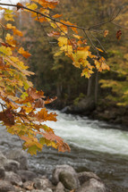fall leaves and flowing river