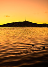 Sunset over a silhouette of a mountain with ducks swimming in the lake water.
