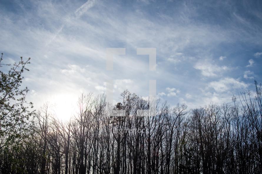 bare winter trees