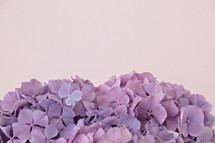 vase of purple hydrangeas