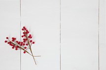 red berries on a white background