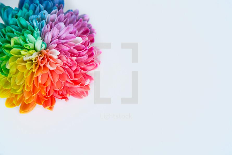single rainbow flower