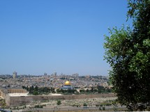 The Temple Mount viewed from the Mt. of Olives, with an olive tree