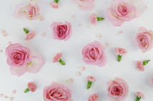 pink roses and carnations on a white background