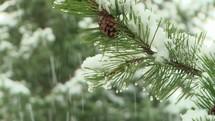 falling snow on a pine tree