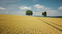 Flying over field with two trees revealing landscape