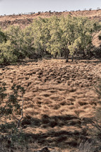 Australian Outback landsape