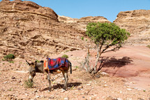 donkey in the desert waiting for a tourist