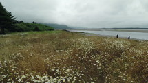 a coastal field of wildflowers and muddy shore