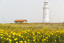 Lighthouse near a field of yellow wildflowers in Cyprus