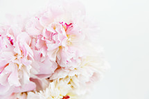 soft pink flowers on white