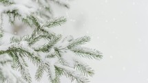 falling snow on pine needles