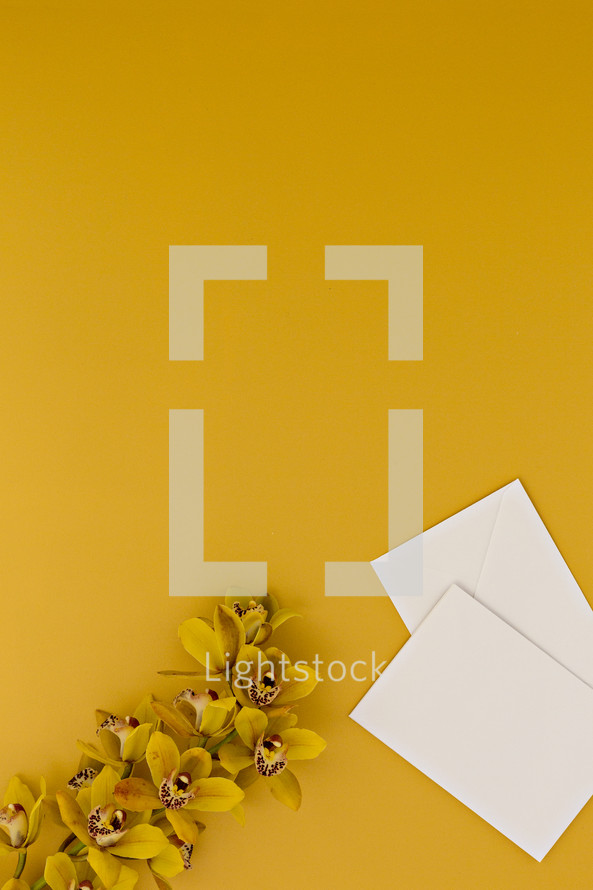 yellow orchids on a yellow background and stationary