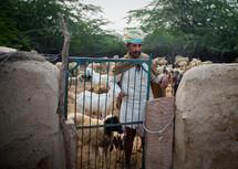 shepherd in India