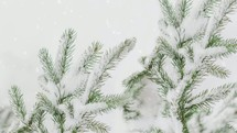 falling snow on pine boughs