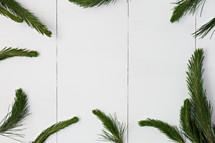 pine boughs border on white