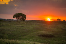 Sunset over a field of grass and tree in Canberra.