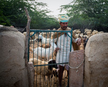 Man at the gate of a livestock pen.