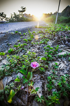 Sunrise over a dirt road with flowers.