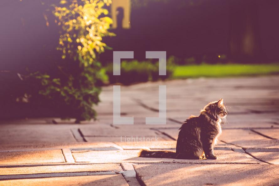 a cat sitting in warm sunlight