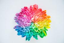 a single rainbow flower