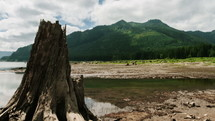 stumps and clouds, along a muddy shore