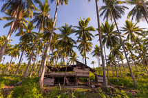shack and palm trees