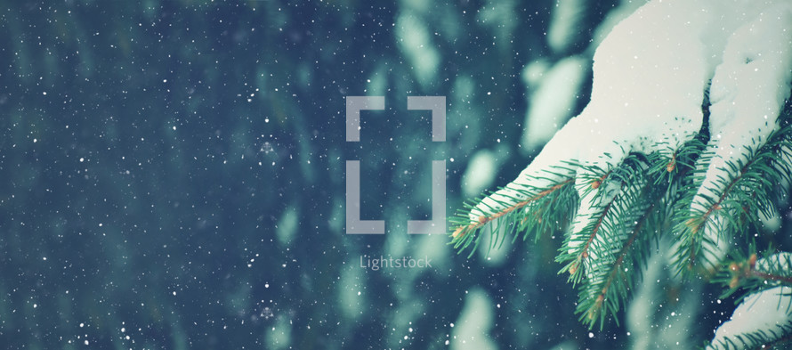 Evergreen and Snow Background