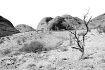 Australia the outback canyon and the tree