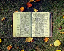 open Bible on the ground and fall leaves