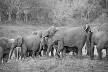 elephants at a wildlife reserve