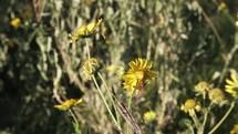 bee crawling on yellow wildflowers