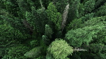 looking down at a forest