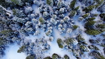 drone flying over forested snowy trees on winter day looking down at green evergreen trees slow motion