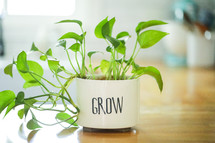 house plant in a pot with the word grow