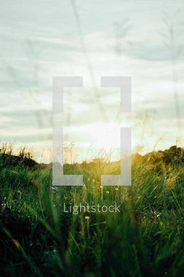 sunlight on green grass