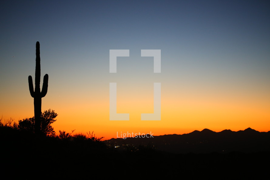 silhouette of a cactus at sunset