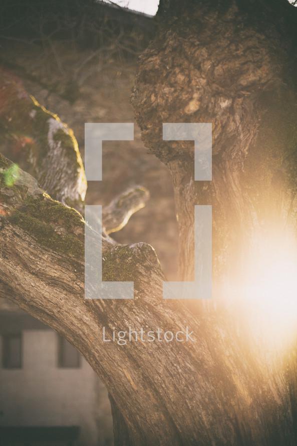 sunburst on a tree trunk