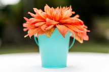 orange flower in a teal cup