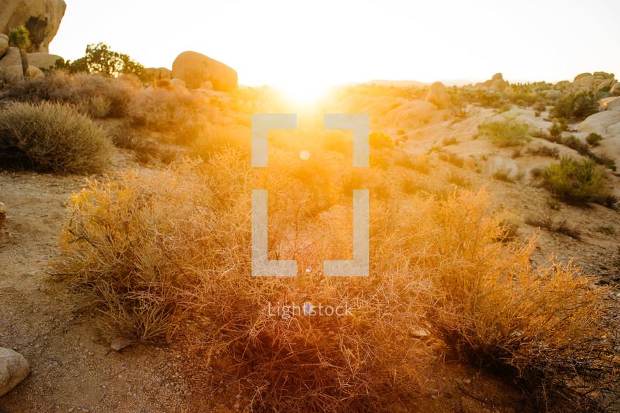 sunlight on dry brush