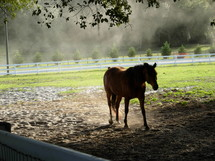 A Horse in a pasture surrounded by a green meadow and white picket fence in central Florida.