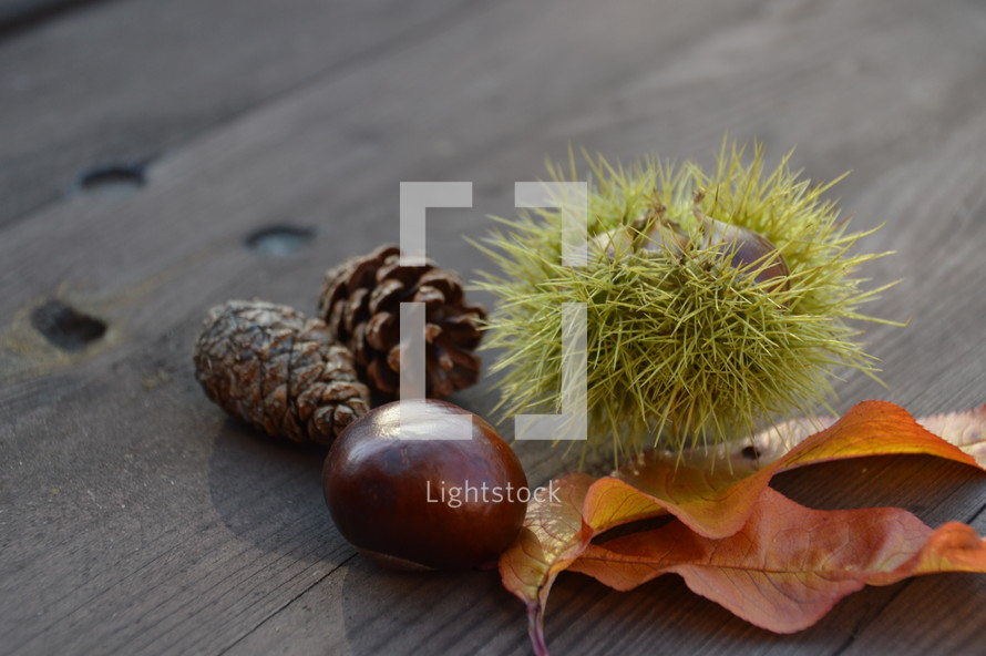 pine cones, seeds, leaves, nature, wood background