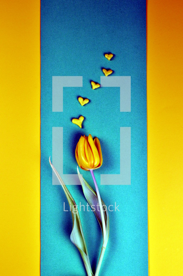 yellow tulip on blue and yellow
