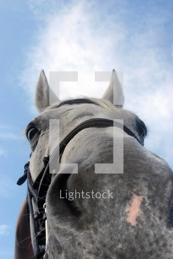 Close up of horse's nose.