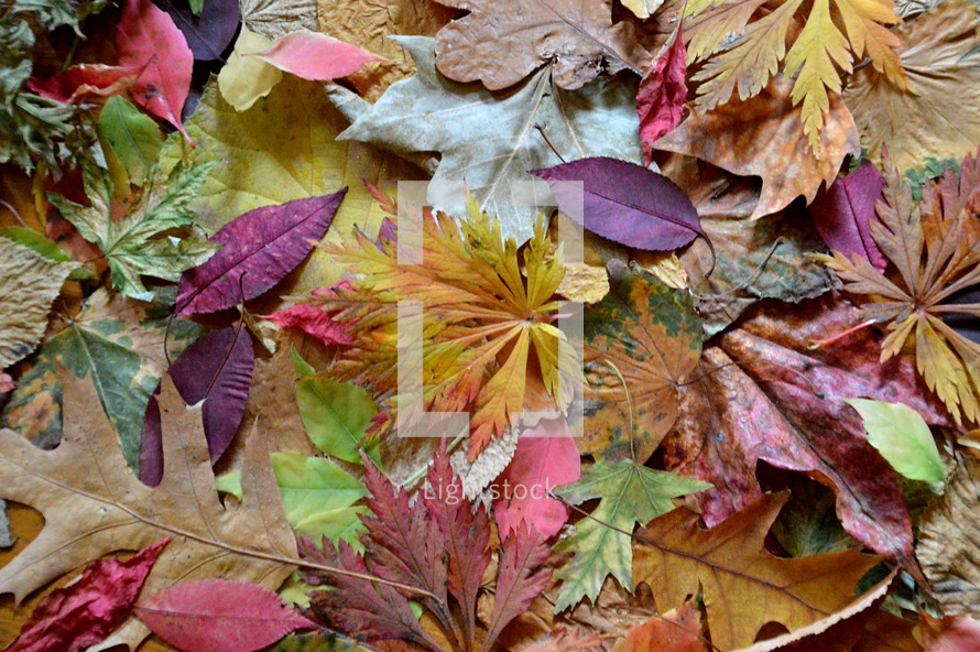 Different colors and shapes of fall leaves.